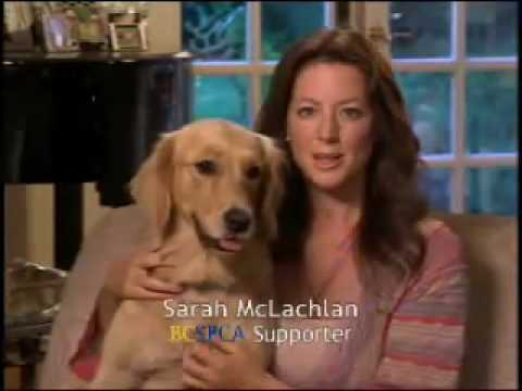 spca commercial by sarah mclachlan youtube
