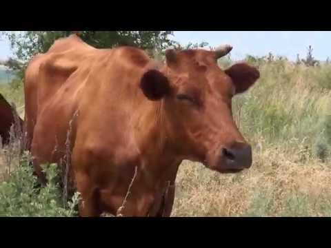 telekanal Vektor: Молочна продукція у Лозовій. Історія та сьогодення