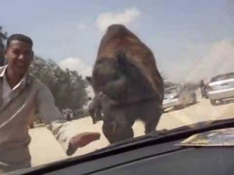 Africano zoo, Alexandra - Cairo free road
