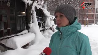 Кот, просидев два дня на дереве, начал покрываться льдом - 11.01.2019