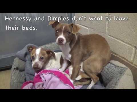Please Help Save Dimples and Hennessy! Two Scared Shelter Dogs!