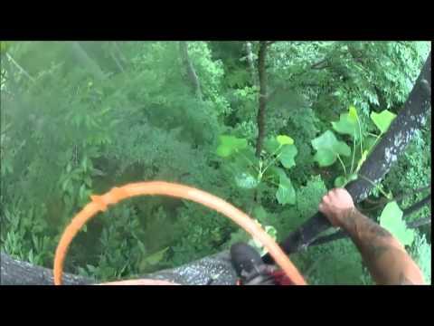 Certified Arborist/High Risk Fell Specialist Ryan T Powell Fishers In.