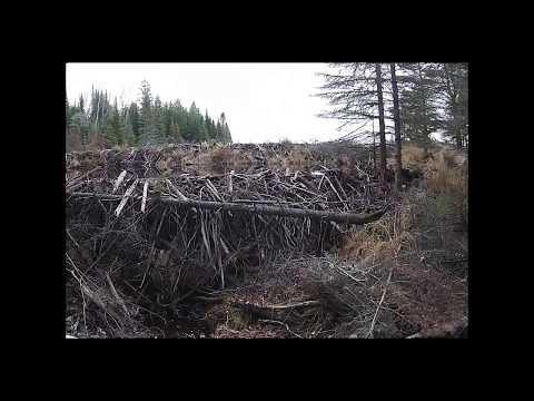 Beaver Dam Collapse Update 2018