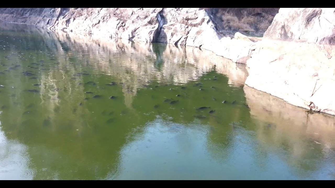 Freshwater fish kerala - Red Bellied Piranha Kerala Piranha Fish Farming