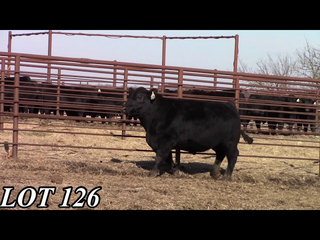 Mead Angus Farms Lot 126