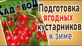 Как правильно подготовить к зиме ягодные культуры