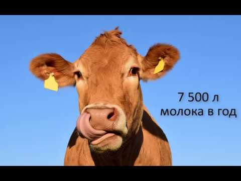 Корова молоко.Какой доход от 8 коров