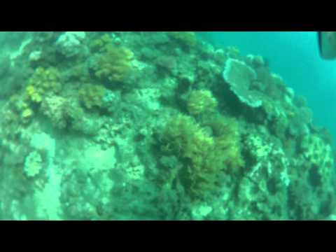 A dive on the GBR with Merine