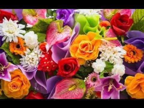 Цветы заказать семена заказать цветы с доставкой дешево москва
