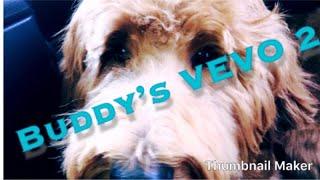 Buddy's VEVO 2