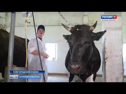 ГТРК СЛАВИЯ Конкурс доярок  26 07 19