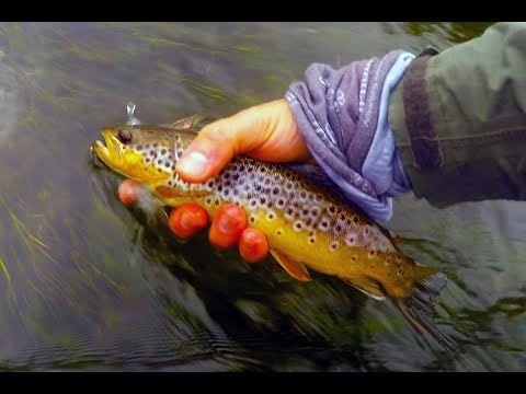 Brown Trout Fishing In Ireland - Fly Fishing - Brown Trout - River Suir - HD - Watch In Full!