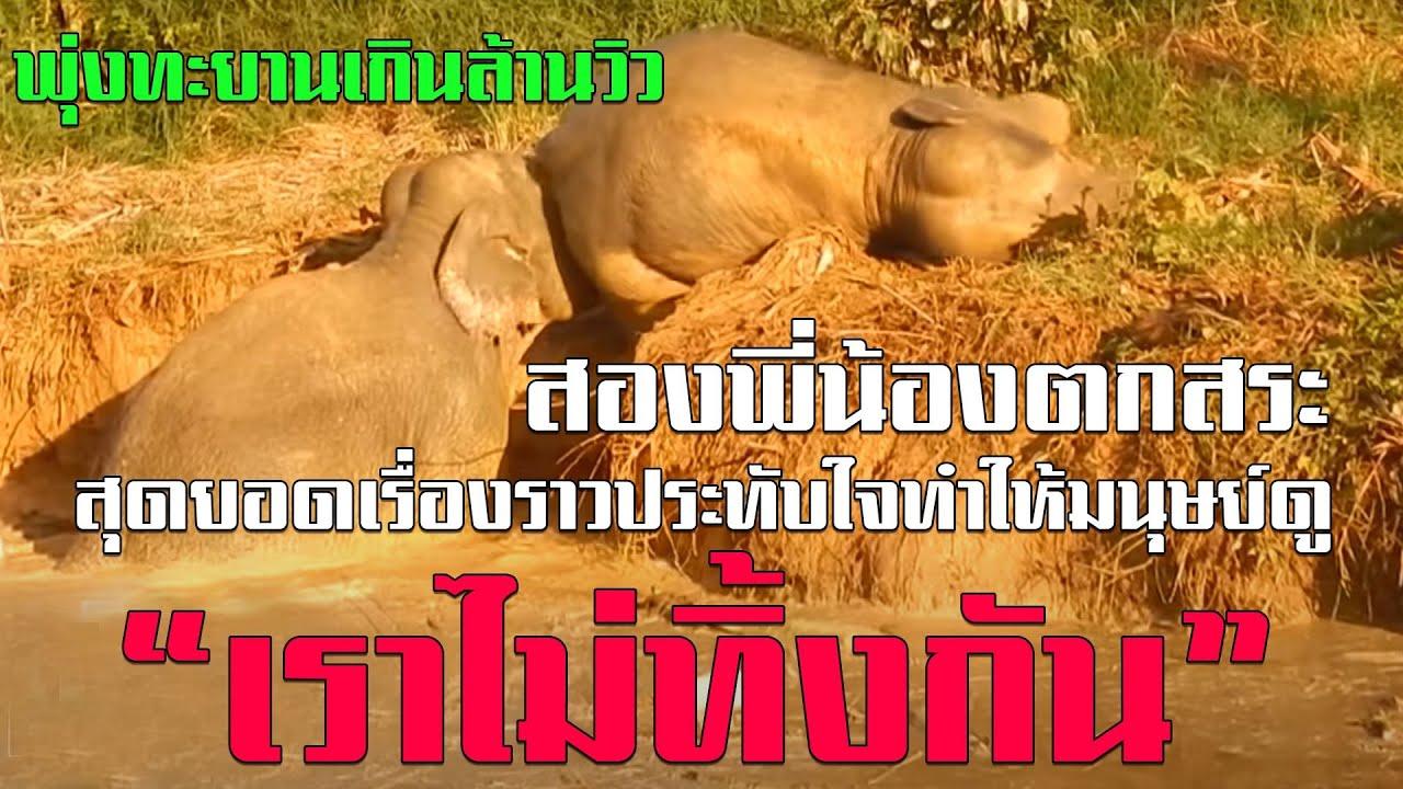 """สุดยอดคลิปช่วยชีวิต """"รอน้องด้วย"""" safety elephant thailand"""