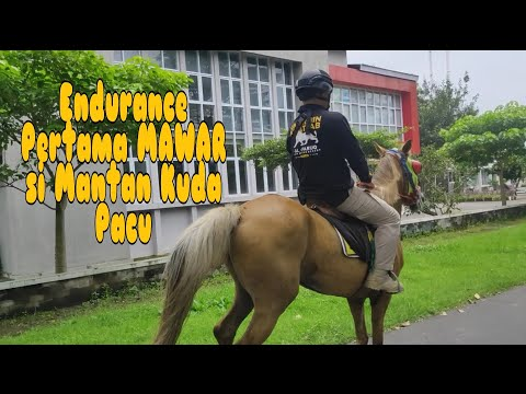 Endurance Pertama MAWAR Si Mantan Kuda Pacu🏇
