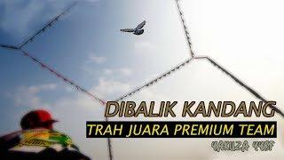 Download Lagu Merpati Kolongan Trah Juara  | Grebek Kandang mp3