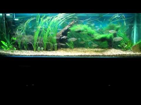 Australian Native 6ft Aquarium