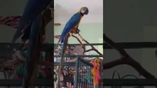 Talking parrot - funny bird