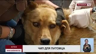 Ветслужба столицы планирует чипировать 6 тыс. собак и кошек
