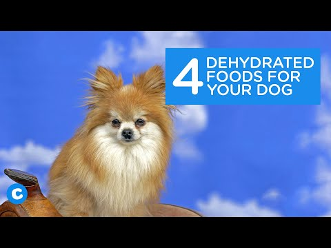 4-dehydrated-foods-for-your-dog-|-chewy