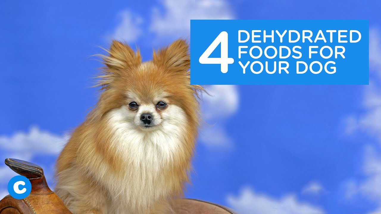 4 Dehydrated Foods Your Puppy Will Love   Chewy