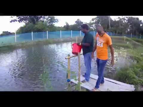 FARM AND FISHERY GMFC BANGLADESH