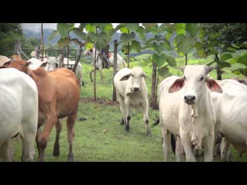 Costa Rica Rural Farming