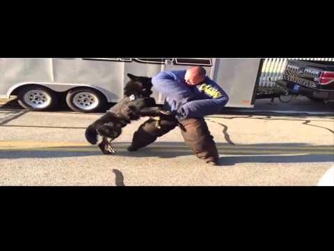 Dressage de chiens à l'attaque Blida | FunnyCat.TV
