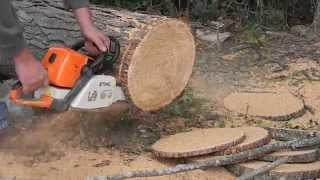stihl ms290 in hickory