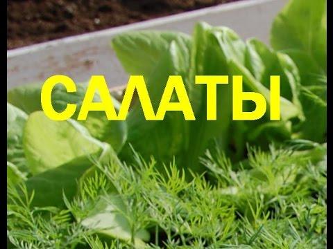 пошаговый рецепт салат с грудки фото
