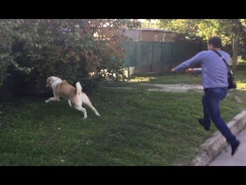Как отучить собаку кидаться на других собак