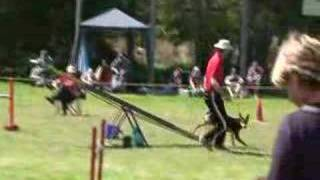 Loose Dog On Agility Course