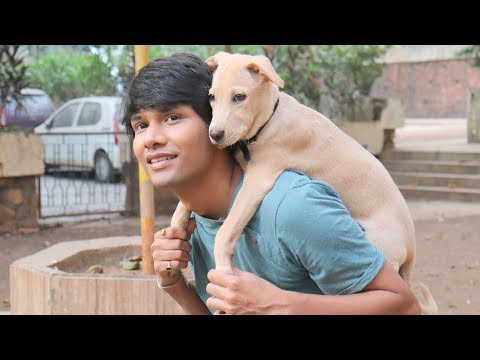 DOG SHORT FILM | SUPER SECRET POCKET | LABRADOR PUPPY || MOHAK MEET || SEEMA