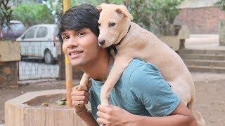 DOG SHORT FILM | SUPER SECRET POCKET | LABRADOR PUPPY || MOHAK MEET