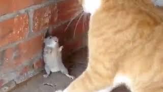 Maus gegen Katze
