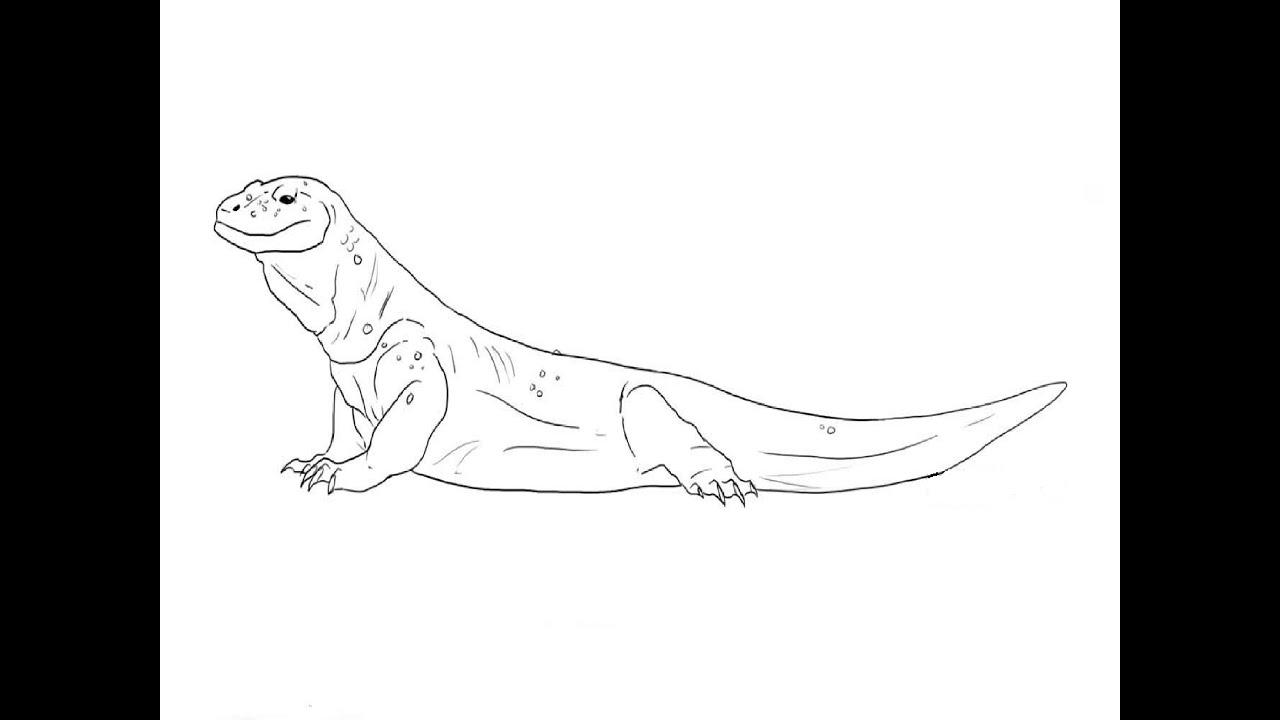 How To Draw A Komodo Dragon Kak Narisovat Komodskogo Varana Youtube