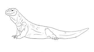 How to Draw a Komodo Dragon / Как нарисовать комодского варана