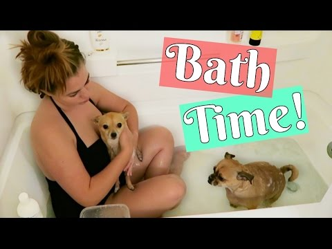 DOG BATH TIME!! Dogs First Bath in the NEW APARTMENT! Chihuahua Bath Party!!