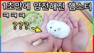 1초만에 햄스터 진정시키는 방법 ㅋㅋㅋ | 심심타임 햄찌 Cute hamster compilation