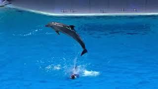 Водное шоу с косатками и дельфинами в Москвариуме