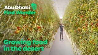 Abu Dhabi Find Wonder   Pure Harvest Smart Farms: ...