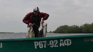 ЖЕРЕХ НА КАЖДОМ ЗАБРОСЕ Рыбалка в Астрахани Ловля жереха на р Бузан  В гостях на ФораФиш