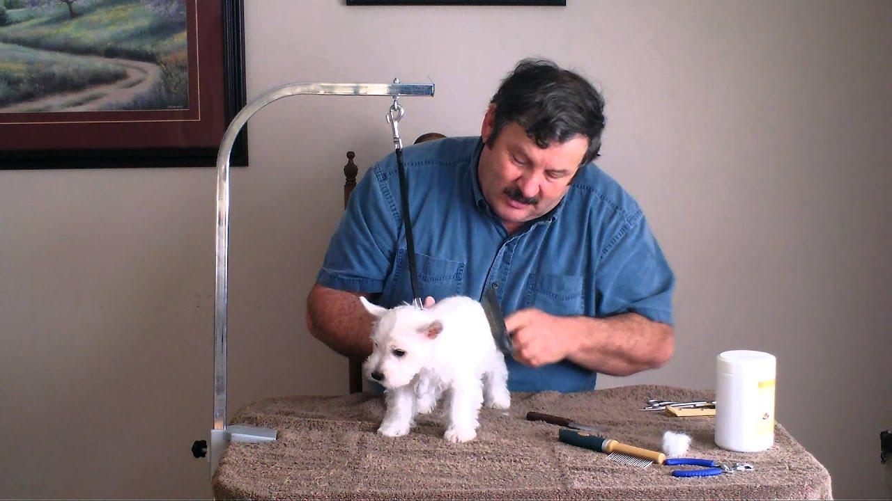 Lessons From a Groomer Whats a Teddy Bear Cut  PetHelpful