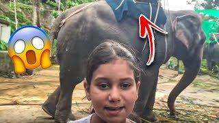 نور ركبت الفيل في تايلاند وقابلنا ثعبان خطير😱 !!