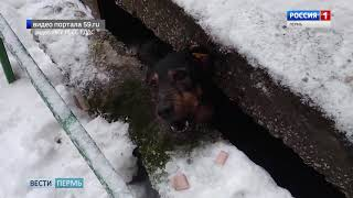 «Не ругайся, сейчас достану»: в Перми спасатели освободили застрявшую собаку