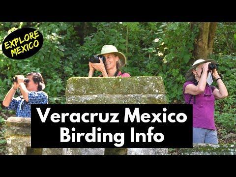 Go Birding in Veracruz Mexico