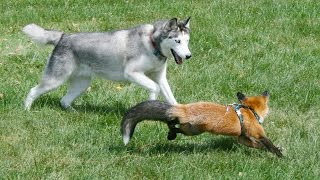 Fox And Hound Are Best Of Friends