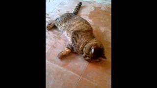 Странное поведение кота! Strange Cat!