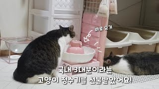 국내에 3대뿐이라는 분홍색 고양이 연꽃 정수기를 선물받…