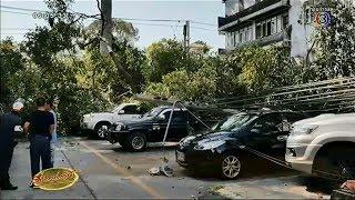 ต้นไม้ยักษ์ล้มทับรถ ตร.พัทยาเสียหาย ชาวบ้านเผยเจ้าแม่ตะเคียนมาเข้าฝันเตือนให้ระวังก่อนเกิดเหตุ