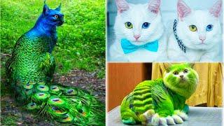 এই বিড়ালগুলিকে দেখার জন্য ভাগ্যেরও প্রয়োজন হয়।Rarest cute Cat Breeds in the world।Amazing Catfact